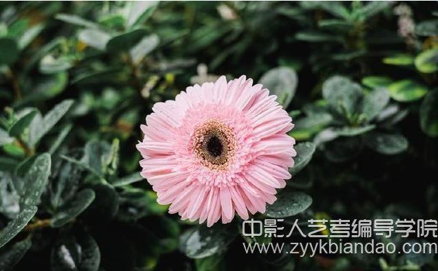拍花卉.jpg